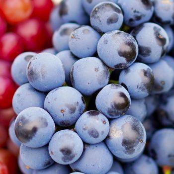 grozđe kalorije